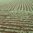 蕎麦畑さんと上向いて歩こう