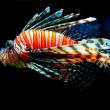 光と魚のファンタジー
