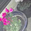 お花を少々植えました。