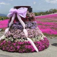 念願の芝桜