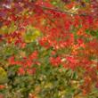 20/Nov 紅葉と小鳥達