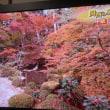 紅葉シーズン来る