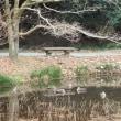 新春の道保川公園の景観