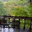 森の紅葉が雨に濡れた日、イタリア料理の塩の多さについて話す。