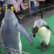 王様ペンギンのいたずら