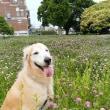 近くにこんなにきれいな花が