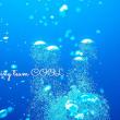 沖縄ダイビング COOLニュース 2018年 2月16日