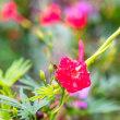 15/Aug  雨には雨の良さがあるかな⁉︎、花とカワラヒワ