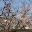 春の花だより・・・