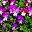 庭の花 2018/03/25