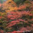 紅葉を追いかけて vol.4 (亀岡市・神蔵寺)