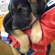 Dear puppy !