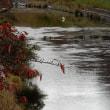 秋の川★鷺風景