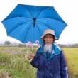 川口由一さん 自然農田畑 2017年10月