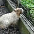 旅打ち 番外 桐生前検 の前に智光山動物園