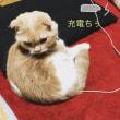 最近の猫は充電式だそうで。