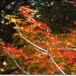 庭の紅葉・・