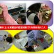 衣裳方や振袖専科の認定試験に挑戦/ももち講座