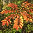 11月2日  秋色の葉