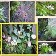 多肉植物や観葉植物の色々