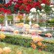 神代植物園で多重露出遊び