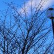 寒い朝・・・公園の木々