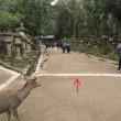 今昔奈良名所「これも橋、橋、橋」