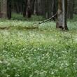 原生林の花畑