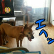 ケンの介護犬の件