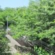 桜道と雑木林