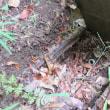 千葉県:船橋市某マンションにて、散水栓から根柱水栓への変更工事