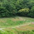 ポピー狩り 横須賀市久里浜 くりはま花の国(7)あじさい