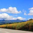 コスモスと八ヶ岳