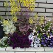 我が家の庭に春が来た
