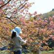 篠窪(しのくぼ)の新ルート 篠窪大橋付近から見える景色(2018/3/18以降の景色)