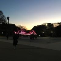 久しぶりに上野へ 大興奮のアンデス文明展 の続きです!