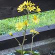 小春日和の花々