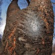 オオムラサキの幼虫、ジョロウグモの卵のう