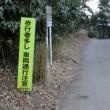 16th 三浦海岸 桜まつり