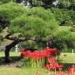 にしさんの花日記 彼岸花 旧芝公園