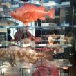 国立科学博物館の日本館