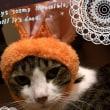 被り物ガチャ「ねこうさぎちゃん」♀猫こむぎ&♂猫だいずがうさぎに!?