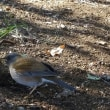 鳥撮りウォーキング