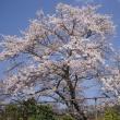 桜 日義~福島