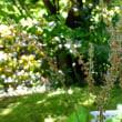 春の和花Ⅱ マイヅルソウ、エビネ、ツクバネソウ、クリンソウ、ユキモチソウ