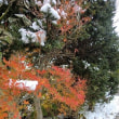 ×ο× とうとう雪かきの時期がやってきました а×а