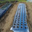 冬の定番、トンネル栽培を開始。