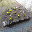 綺麗に花壇を作っています