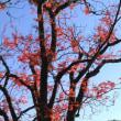 2017年 東京駒込の六義園の紅葉