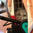 渡米する猫